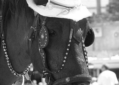 Hlava kone