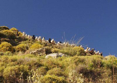 Vozová cesta a kozy nad soutěskou Maganistra